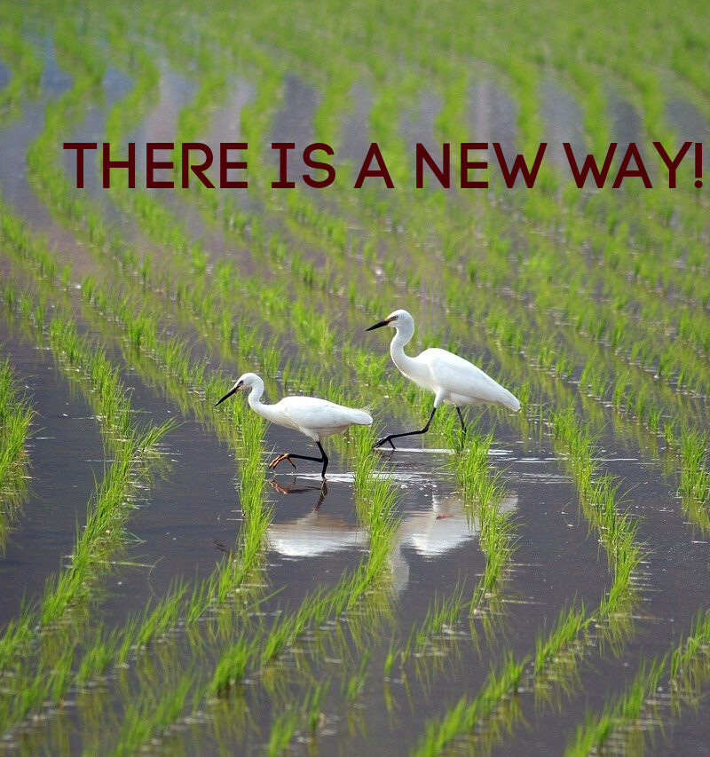 THERE IS A NEW WAY!